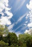 Árboles y cielo Imagen de archivo