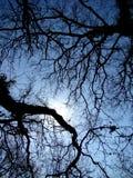 Árboles y cielo fotos de archivo