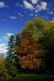 Árboles y cielo azul imágenes de archivo libres de regalías