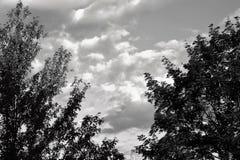Árboles y cielo blancos y negros Imagen de archivo