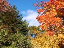 Árboles y cielo de la caída Imagen de archivo