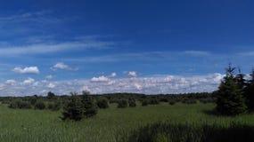 Árboles y cielo de pino foto de archivo libre de regalías