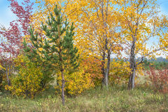 Árboles y cielo del otoño del color Fotos de archivo libres de regalías