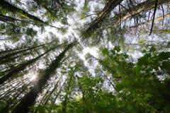 Árboles y cielo granangulares Foto de archivo libre de regalías