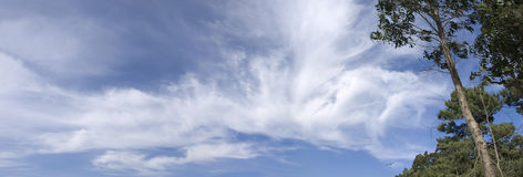 Árboles y cielo panorámicos Imagen de archivo