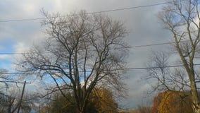 Árboles y cielo Vista muy hermosa imágenes de archivo libres de regalías