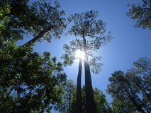 Árboles y cielo y sol foto de archivo libre de regalías