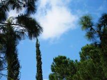 Árboles y cielos Foto de archivo libre de regalías