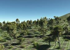 Árboles y colinas de los campos Fotos de archivo libres de regalías