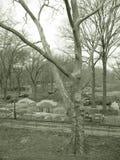Árboles y construcción en sepia Imagen de archivo libre de regalías