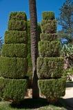 Árboles y decorativo derribados Imagen de archivo libre de regalías