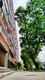 Árboles y edificio fotos de archivo libres de regalías