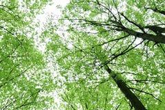 Árboles y el cielo Imagenes de archivo
