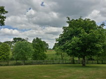 Árboles y el cielo Imágenes de archivo libres de regalías