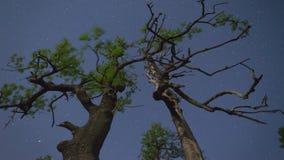 Árboles y el cielo nocturno almacen de video
