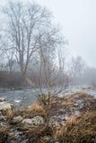 Árboles y el río Fotografía de archivo
