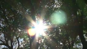 Árboles y el Sun almacen de metraje de vídeo