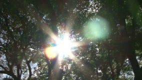 Árboles y el Sun metrajes