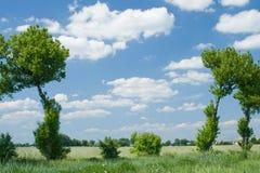 Árboles y espacio Imágenes de archivo libres de regalías