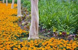 Árboles y flores Foto de archivo libre de regalías