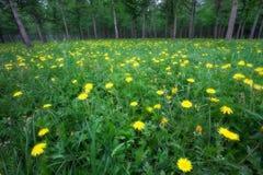 Árboles y flores imagen de archivo libre de regalías
