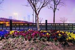 Árboles y flores en la noche Fotografía de archivo libre de regalías