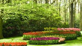 Árboles y flores en resorte fotografía de archivo