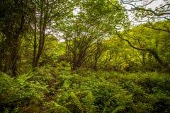 Árboles y helechos en bosque Imagenes de archivo