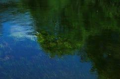 Árboles y hierbas reflejados en el río Foto de archivo