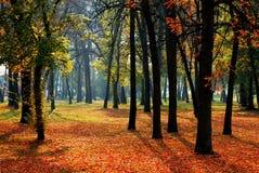 Árboles y hojas Fotografía de archivo libre de regalías