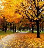 Árboles y hojas Imagen de archivo libre de regalías