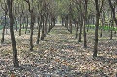 Árboles y hojas Foto de archivo libre de regalías