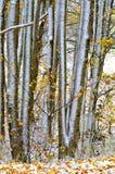 Árboles y hojas abstractos en invierno Imagen de archivo