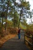 Árboles y hojas de pino con la trayectoria mojada Foto de archivo