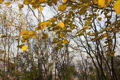 Árboles y hojas del otoño en el parque Imagenes de archivo