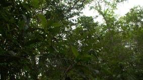 Árboles y hojas en bosque grueso metrajes