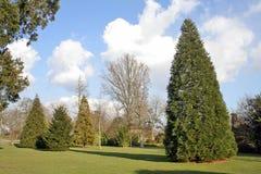 Árboles y jardín Imagen de archivo libre de regalías