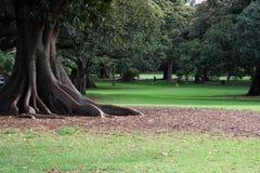 Árboles y jardines hermosos Imagen de archivo libre de regalías