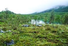 Árboles y lago de abedul en Noruega Foto de archivo libre de regalías