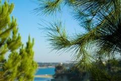 Árboles y lago de pino fotografía de archivo