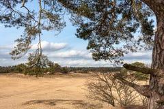 Árboles y llanos de la arena en el postre holandés Foto de archivo
