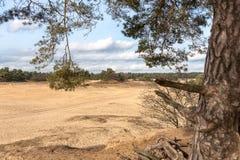 Árboles y llanos de la arena en el postre holandés Imagen de archivo