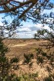 Árboles y llanos de la arena en el postre holandés Foto de archivo libre de regalías