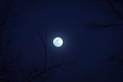 Árboles y luna Fotos de archivo