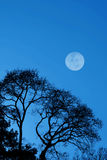 Árboles y luna silueteados Fotos de archivo libres de regalías