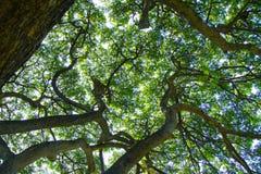 Árboles y luz del parque de la belleza del espacio imagenes de archivo