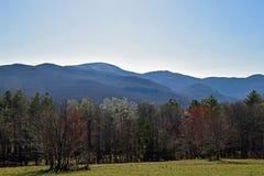 Árboles y montañas Imágenes de archivo libres de regalías