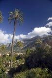Árboles y montañas de Majorca Imágenes de archivo libres de regalías