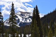 Árboles y montañas de pino Fotos de archivo
