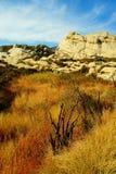 Árboles y montañas en California Imagenes de archivo